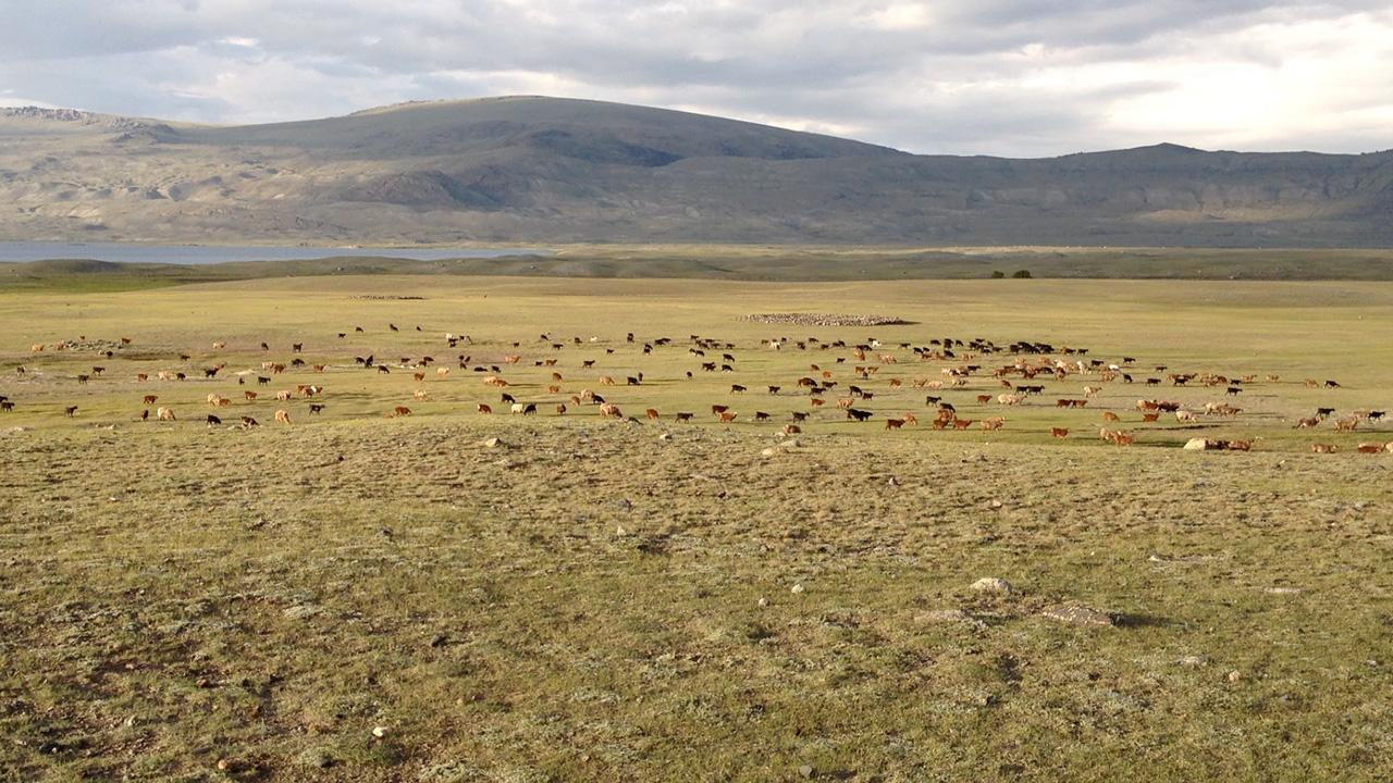 mongolie-steppe-troupeau.jpg